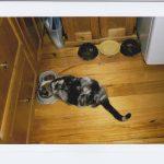 Giv din kat en sund kost