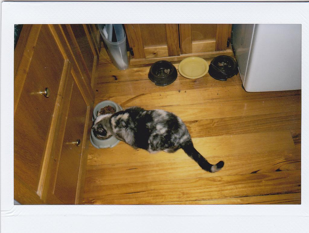 11617715535_0981b073c6_b_cat-food