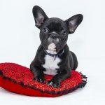 Forskellige hunde - giver forskelligt behov