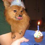 Pupcakes til din hundehvalp