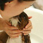 Vask og klipning af kæledyr