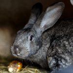 Find det bedste kaninbur udendørs