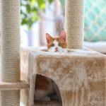 Din kat vil elske et godt kradsetræ